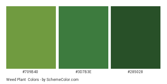 Weed Plant - Color scheme palette thumbnail - #709B40 #3D7B3E #285028