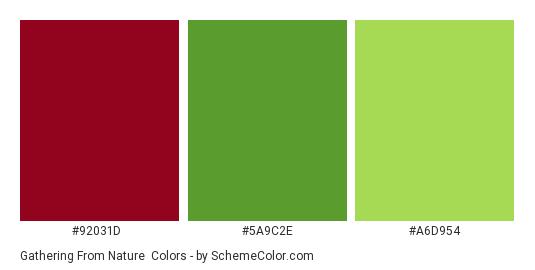 Gathering from Nature - Color scheme palette thumbnail - #92031D #5A9C2E #A6D954
