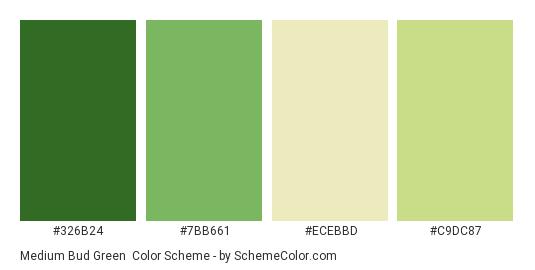 Medium Bud Green - Color scheme palette thumbnail - #326b24 #7bb661 #ecebbd #c9dc87