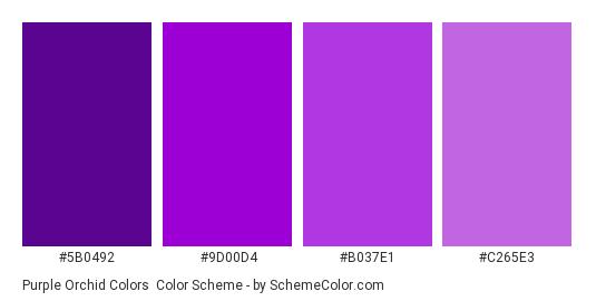 purple orchid colors color scheme purple schemecolor com