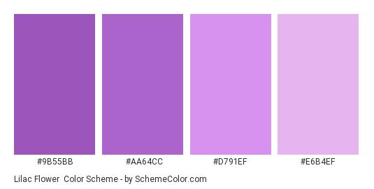 Lilac Flower - Color scheme palette thumbnail - #9b55bb #aa64cc #d791ef #e6b4ef