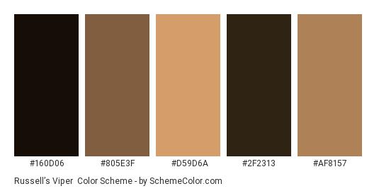 Russell's Viper - Color scheme palette thumbnail - #160D06 #805E3F #D59D6A #2F2313 #AF8157