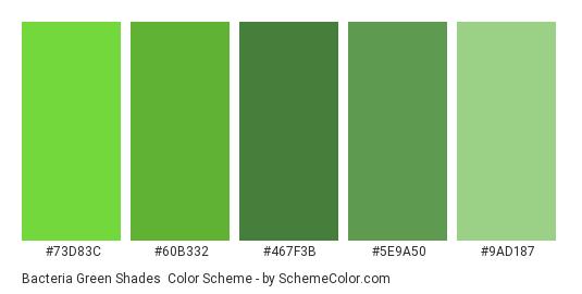 Bacteria Green Shades - Color scheme palette thumbnail - #73D83C #60B332 #467F3B #5E9A50 #9AD187