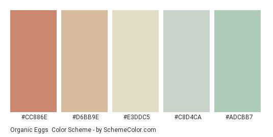 Organic Eggs - Color scheme palette thumbnail - #CC886E #D6BB9E #E3DDC5 #C8D4CA #ADCBB7