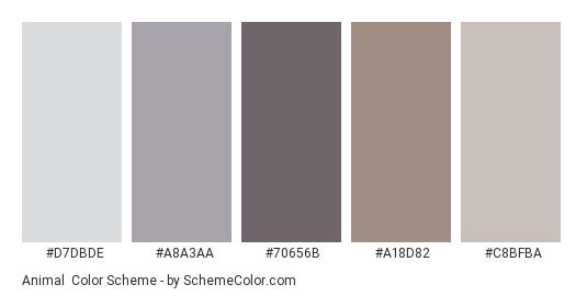 Animal - Color scheme palette thumbnail - #d7dbde #a8a3aa #70656b #a18d82 #c8bfba