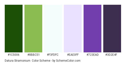 Datura Stramonium - Color scheme palette thumbnail - #1C5006 #8BBC51 #F3FDFC #EAE0FF #723EAD #3D2E4F