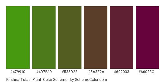 Krishna Tulasi Plant - Color scheme palette thumbnail - #479910 #4d7b19 #535d22 #5a3e2a #602033 #66023c
