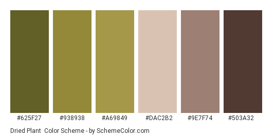 Dried Plant - Color scheme palette thumbnail - #625f27 #938938 #a69849 #dac2b2 #9e7f74 #503a32