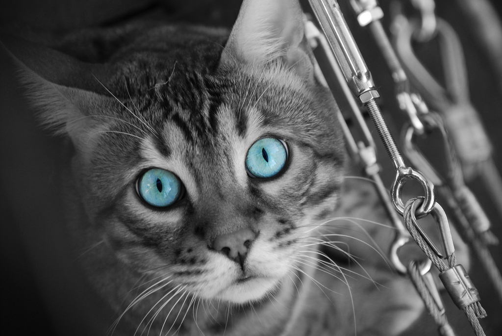 selective colouring examples tora colour spot knight outstanding pc animals colors splash eye tanya photograph colorful schemecolor coloring using photographer