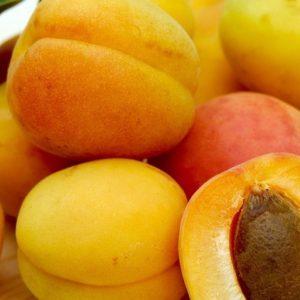 Apricot Love