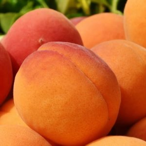 Apricots Colors - Orange