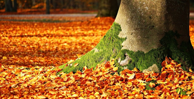 Autumn Comes To Mind