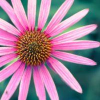 Beautiful bloom colors