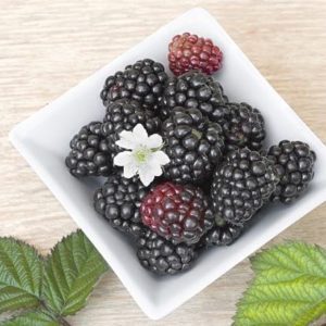 Blackberry Niblets
