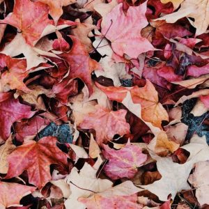 Autumn leaves lying on the ground and creating a blanket
