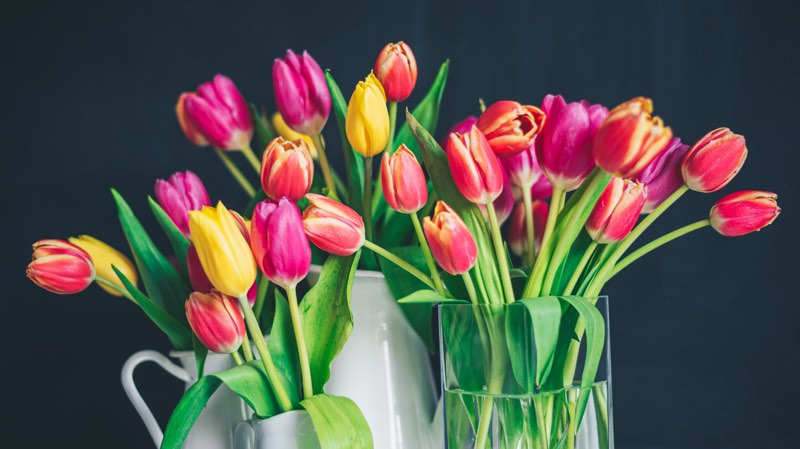 Brightly colored tulips of yellow, pink and magenta