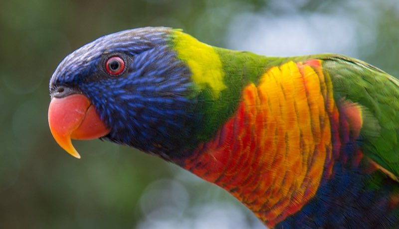 Brightly colored parrot