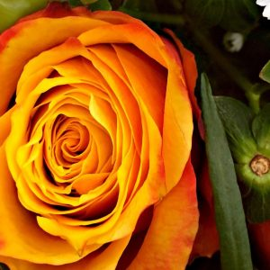 Rose with brilliant orange to yellow colors