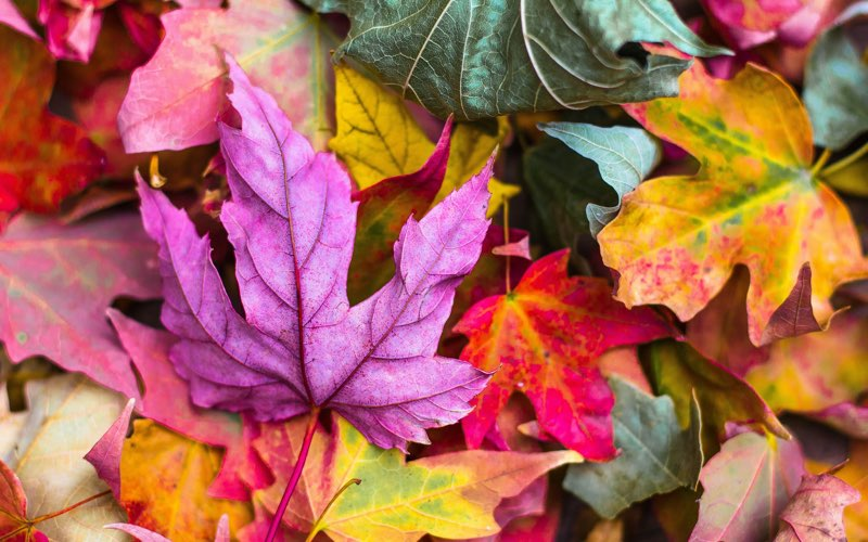 Autumn leaves of various colors