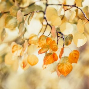 Fading Colors of Autumn