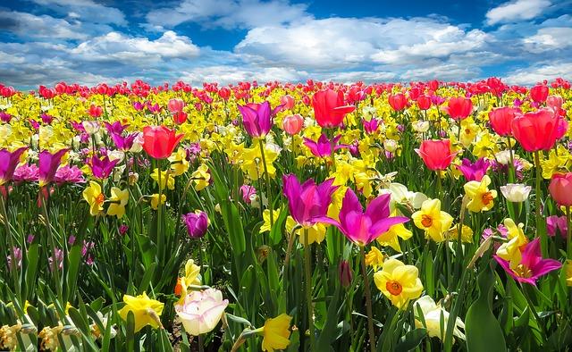 Frühlingsanfang colors