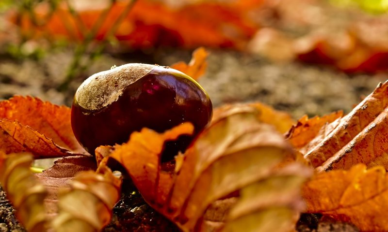 The fruit of autumn