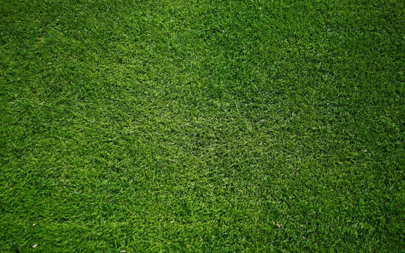 Green grass in a lawn