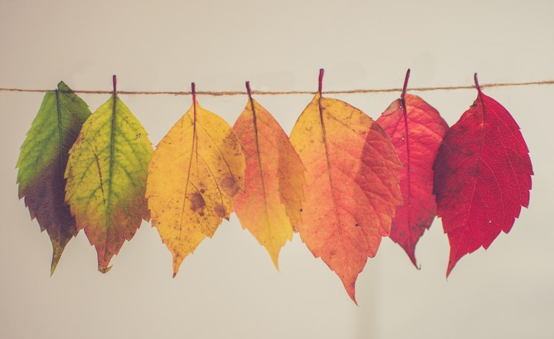Colored leaves of autumn hanging on a twine