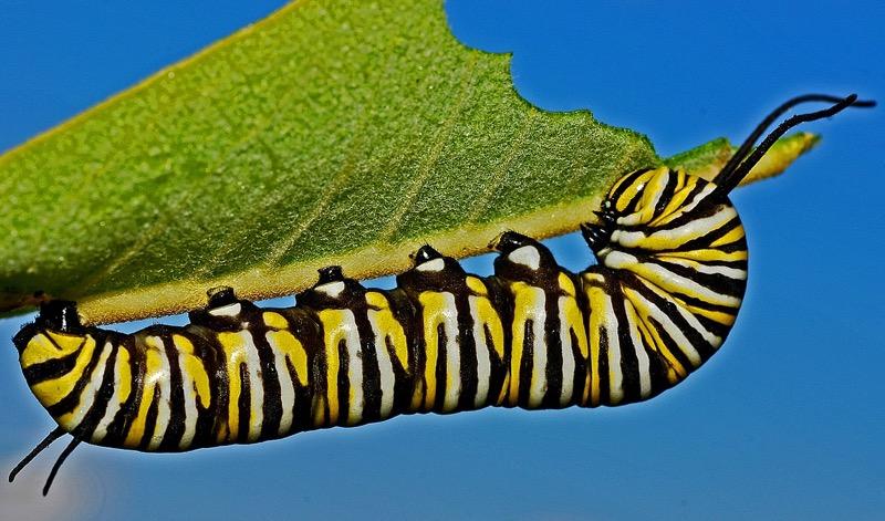 Let Me Eat - bug - leaf