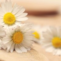 Love Your Daisies flower