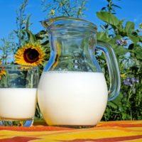 Milk Sun Flower