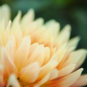 New flower bloom
