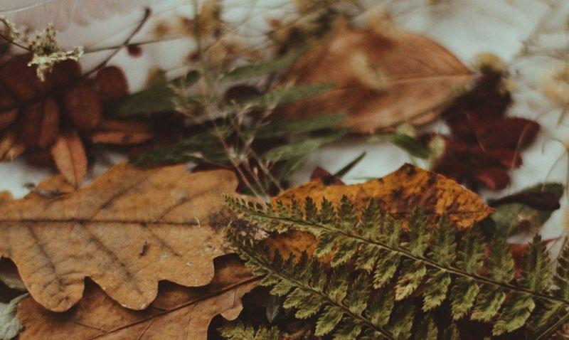 Dried oak and fern leaves