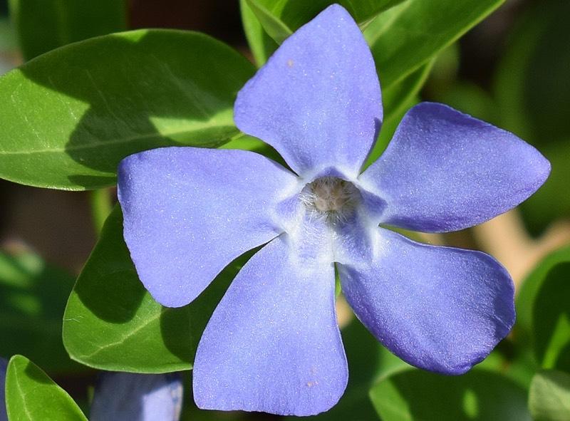 Periwinkle Blue Color Scheme Blue Schemecolorcom