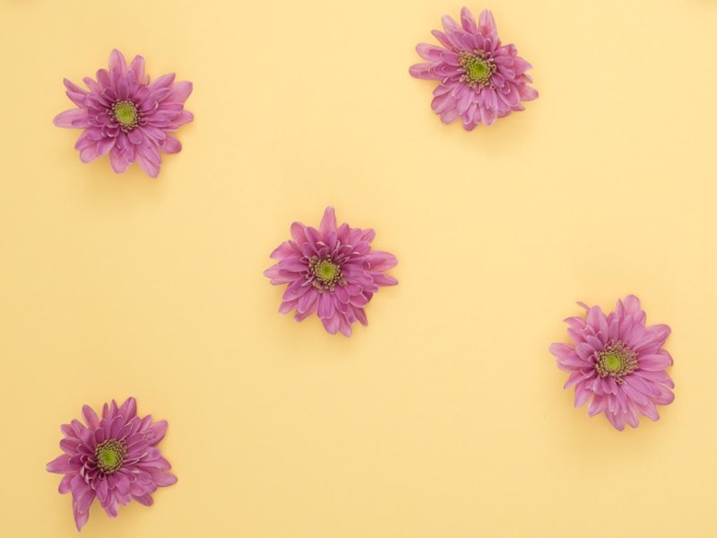 Pink Daisies image color scheme