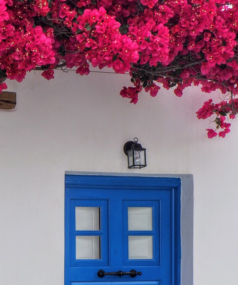 Pink Flowers, Blue Door