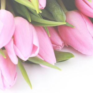 Pink Tulips For You