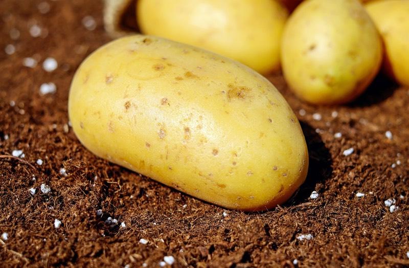 Potato Grounded
