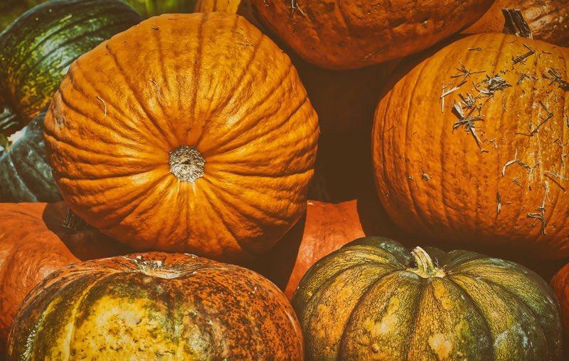 Pumpkin season - pumpkins in the fall