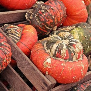 Varied colors of pumpkins