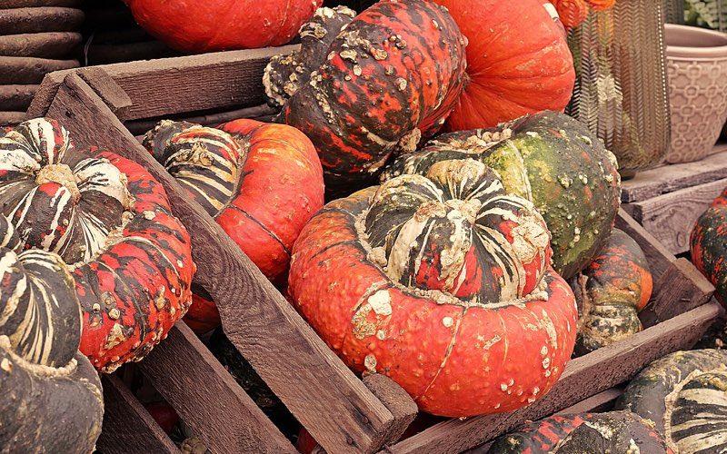 Varied colors of pumpkins