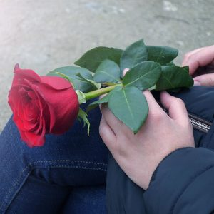 Red Rose for Lover