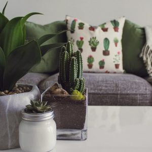 Cactus and succulents decorated on a table