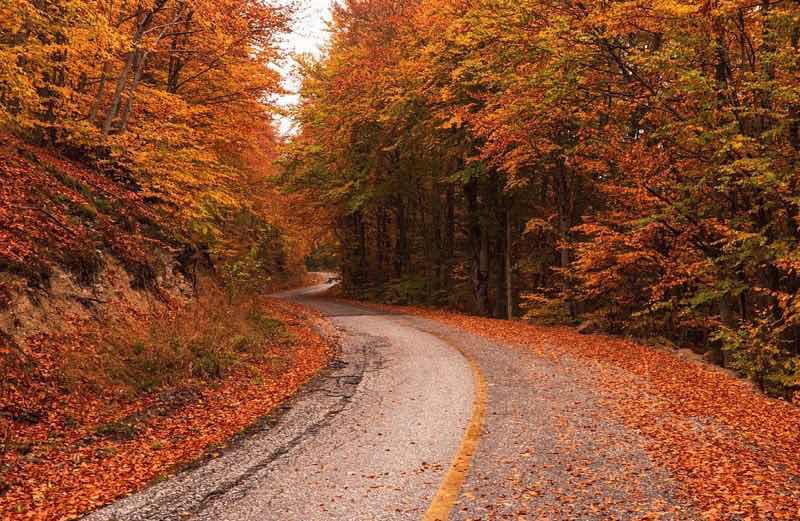 Road in autumn (fall)