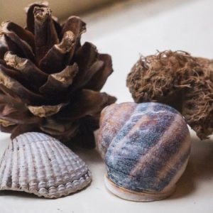 Seashells and pine cones decorated