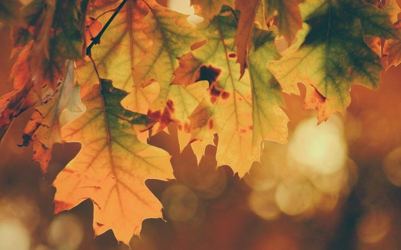 Shadow of Autumn