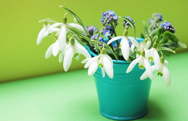 Snowdrop Flowers In Green Bucket