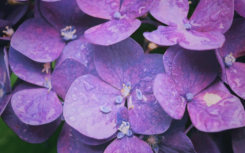 violet, pink and purple colored flowers