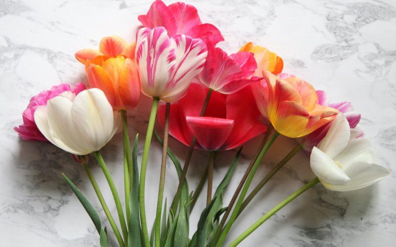 Blooms of spring season
