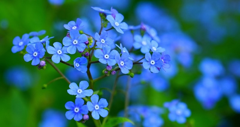 Spring Flowers Are Blue Color Scheme Blue Schemecolor Com